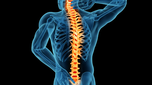 spine pic